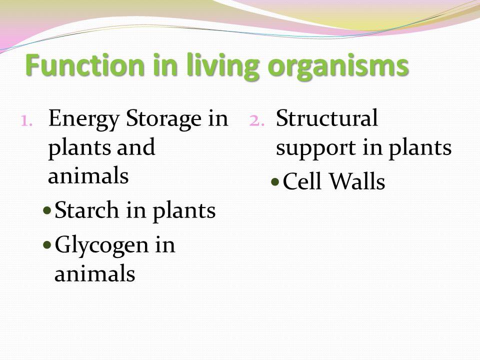 3 Function In Living Organisms 1 Energy Storage