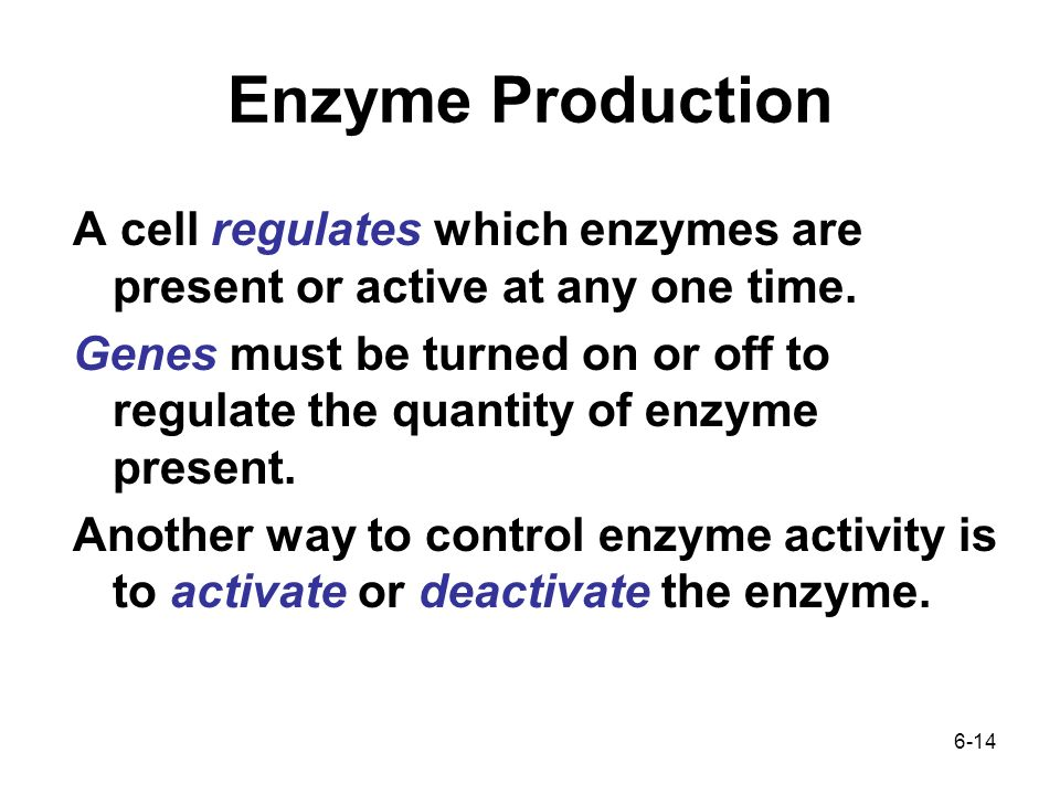 6-14 A cell regulates which enzymes are present or active at any one time.