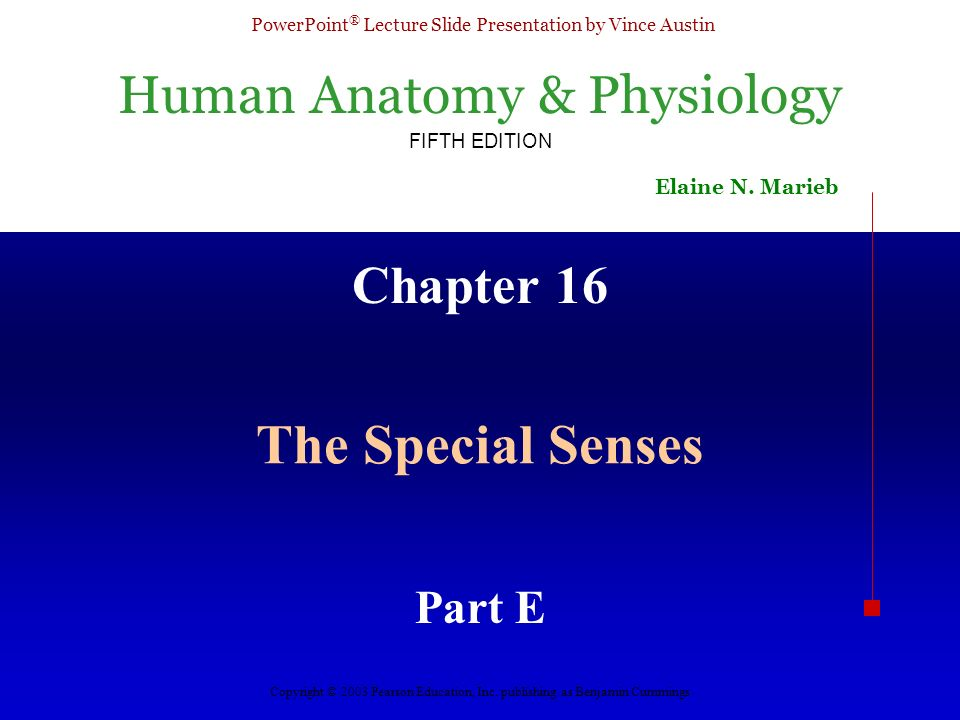 Human Anatomy & Physiology FIFTH EDITION Elaine N. Marieb PowerPoint ...