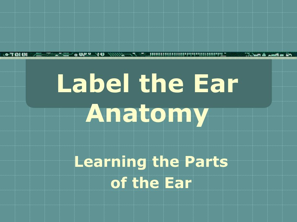 Label the Ear Anatomy Learning the Parts of the Ear