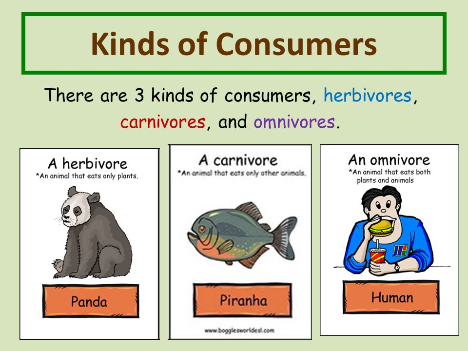 Kinds of Consumers There are 3 kinds of consumers, herbivores, carnivores, and omnivores.