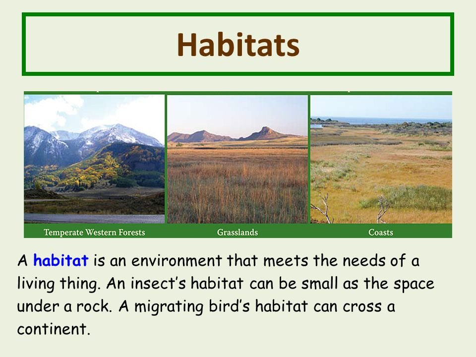Habitats A habitat is an environment that meets the needs of a living thing.