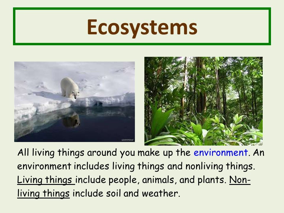 Ecosystems All living things around you make up the environment.