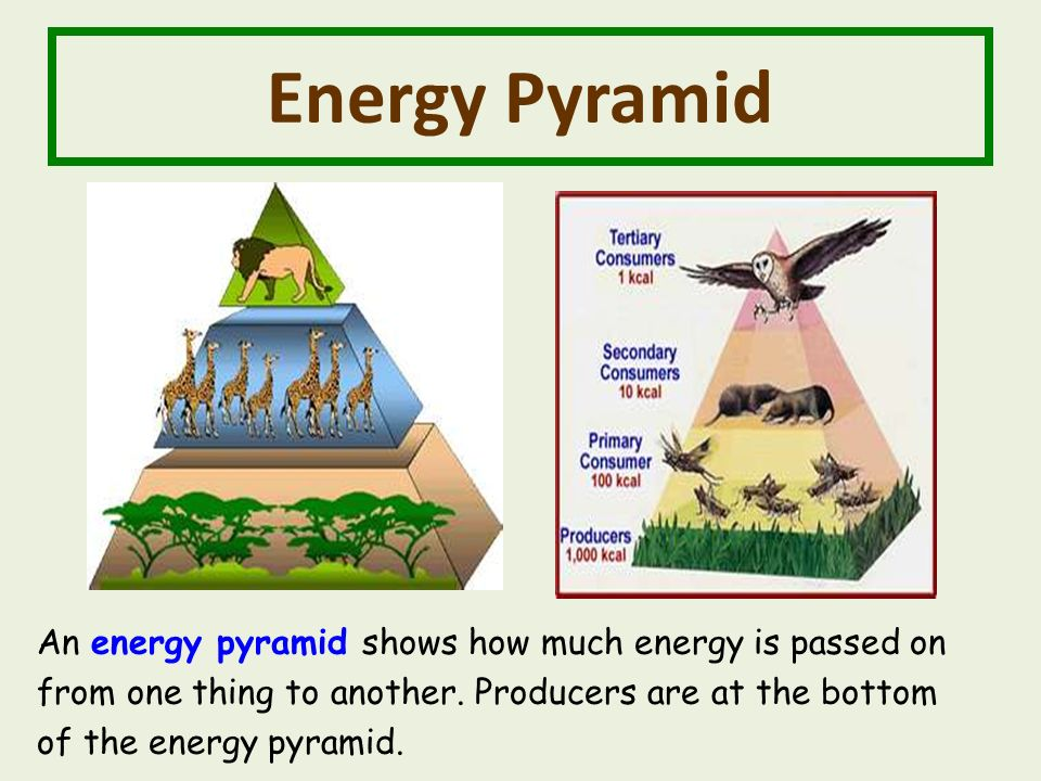 Energy Pyramid An energy pyramid shows how much energy is passed on from one thing to another.
