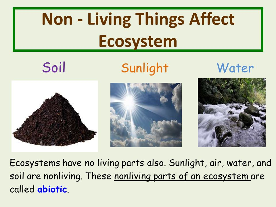 Non - Living Things Affect Ecosystem Soil Sunlight Water Ecosystems have no living parts also.