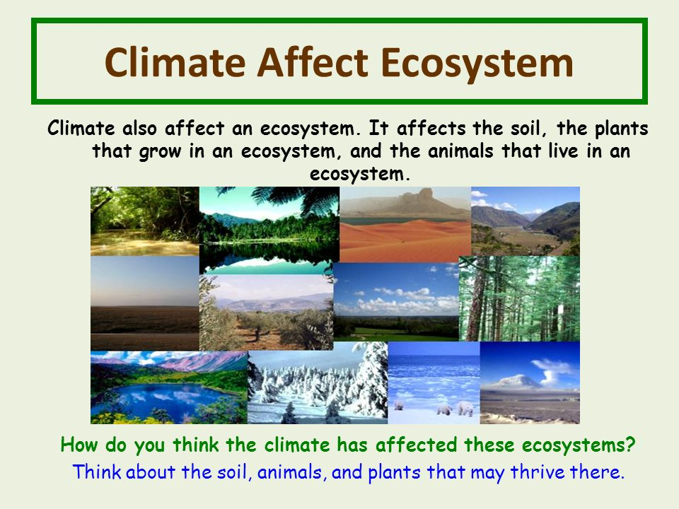 Climate Affect Ecosystem Climate also affect an ecosystem.