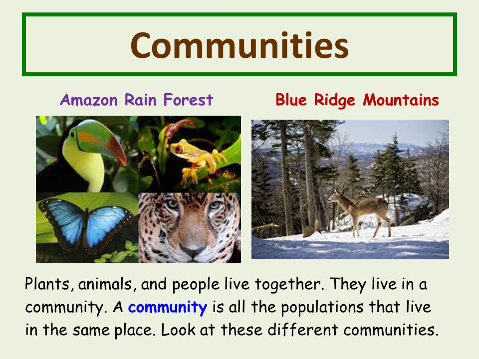 Communities Amazon Rain Forest Blue Ridge Mountains Plants, animals, and people live together.