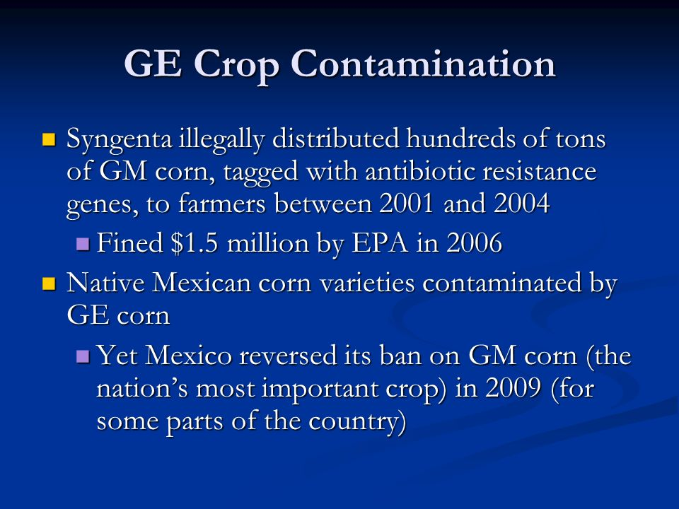 GE Crop Contamination Syngenta illegally distributed hundreds of tons of GM corn, tagged with antibiotic resistance genes, to farmers between 2001 and 2004 Syngenta illegally distributed hundreds of tons of GM corn, tagged with antibiotic resistance genes, to farmers between 2001 and 2004 Fined $1.5 million by EPA in 2006 Fined $1.5 million by EPA in 2006 Native Mexican corn varieties contaminated by GE corn Native Mexican corn varieties contaminated by GE corn Yet Mexico reversed its ban on GM corn (the nation's most important crop) in 2009 (for some parts of the country) Yet Mexico reversed its ban on GM corn (the nation's most important crop) in 2009 (for some parts of the country)