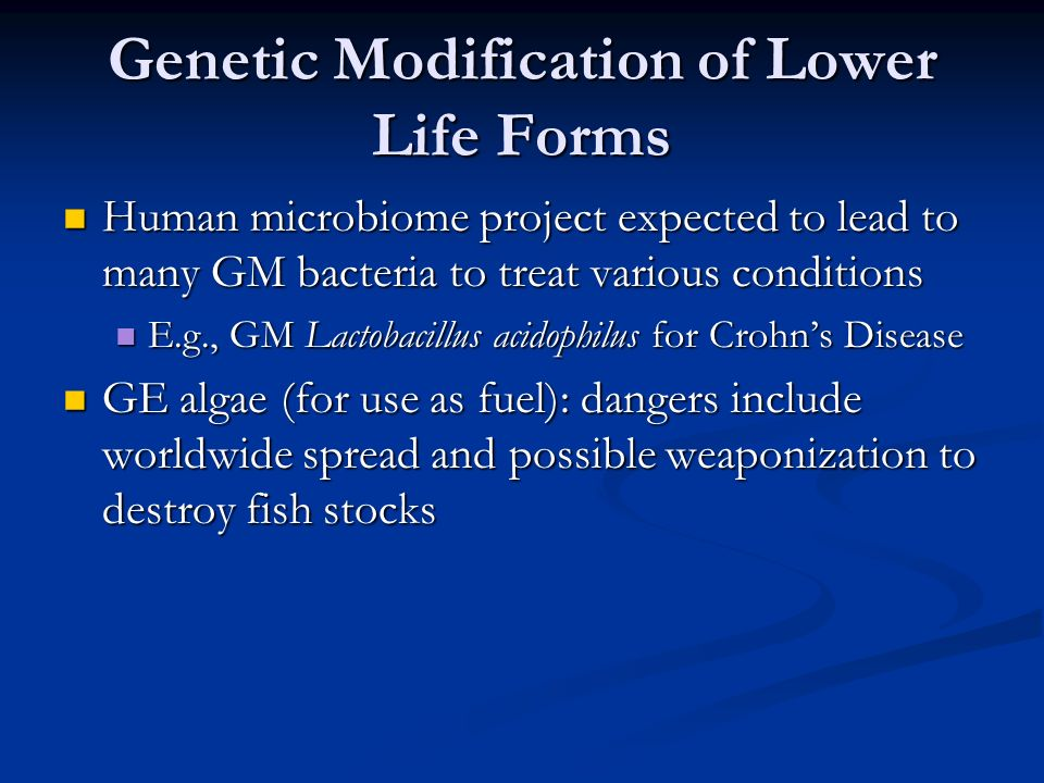 Genetic Modification of Lower Life Forms Human microbiome project expected to lead to many GM bacteria to treat various conditions Human microbiome project expected to lead to many GM bacteria to treat various conditions E.g., GM Lactobacillus acidophilus for Crohn's Disease E.g., GM Lactobacillus acidophilus for Crohn's Disease GE algae (for use as fuel): dangers include worldwide spread and possible weaponization to destroy fish stocks GE algae (for use as fuel): dangers include worldwide spread and possible weaponization to destroy fish stocks
