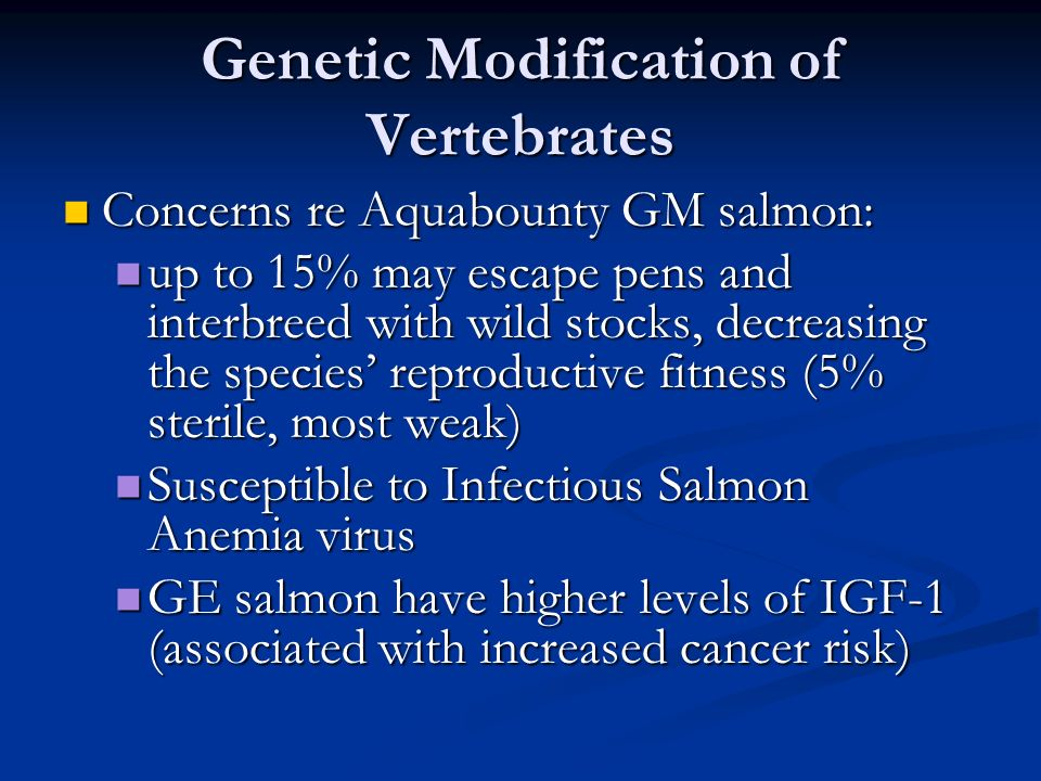 Genetic Modification of Vertebrates Concerns re Aquabounty GM salmon: Concerns re Aquabounty GM salmon: up to 15% may escape pens and interbreed with wild stocks, decreasing the species' reproductive fitness (5% sterile, most weak) up to 15% may escape pens and interbreed with wild stocks, decreasing the species' reproductive fitness (5% sterile, most weak) Susceptible to Infectious Salmon Anemia virus Susceptible to Infectious Salmon Anemia virus GE salmon have higher levels of IGF-1 (associated with increased cancer risk) GE salmon have higher levels of IGF-1 (associated with increased cancer risk)