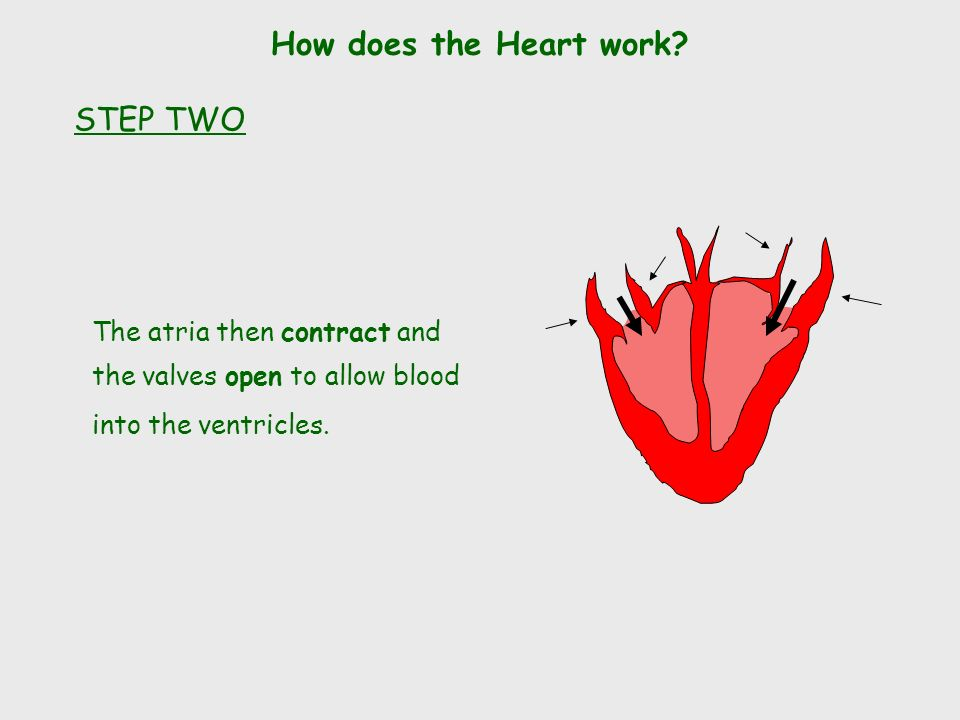 The atria then contract and the valves open to allow blood into the ventricles.