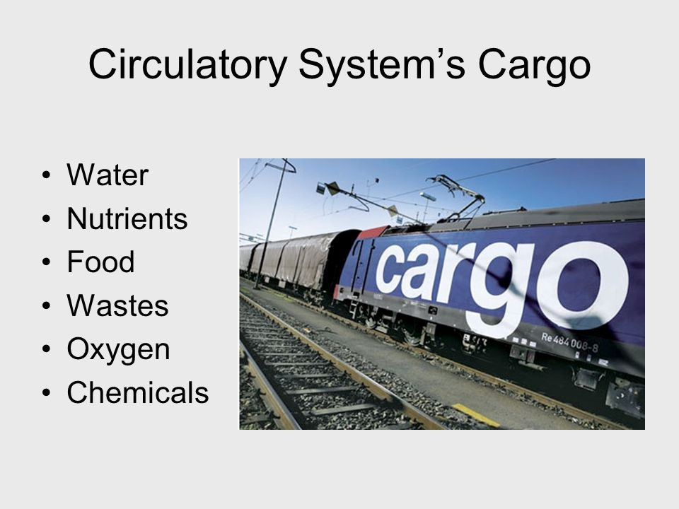 Circulatory System's Cargo Water Nutrients Food Wastes Oxygen Chemicals