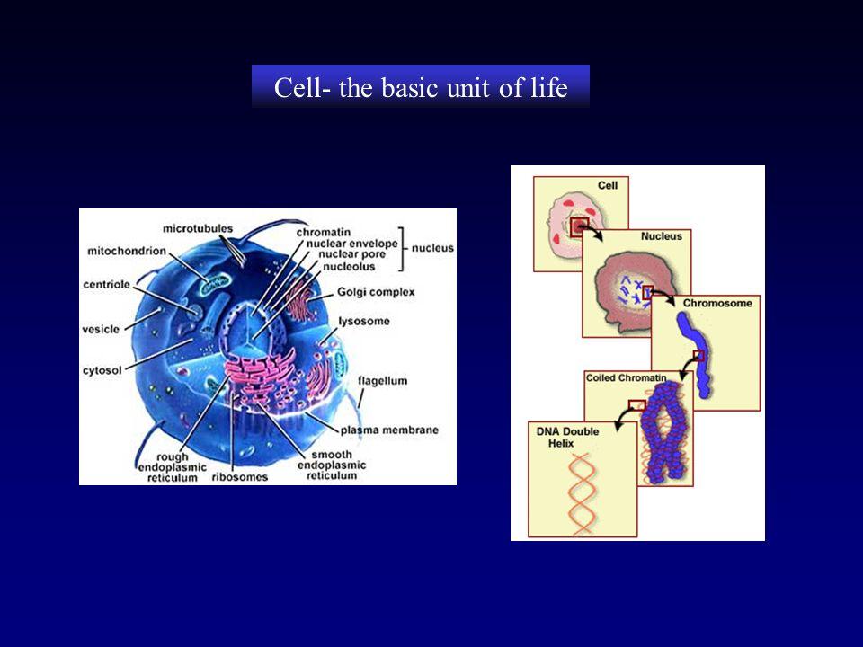 Structural biology martina mijukovi eth zrich switzerland 2 cell the basic unit of life toneelgroepblik Images