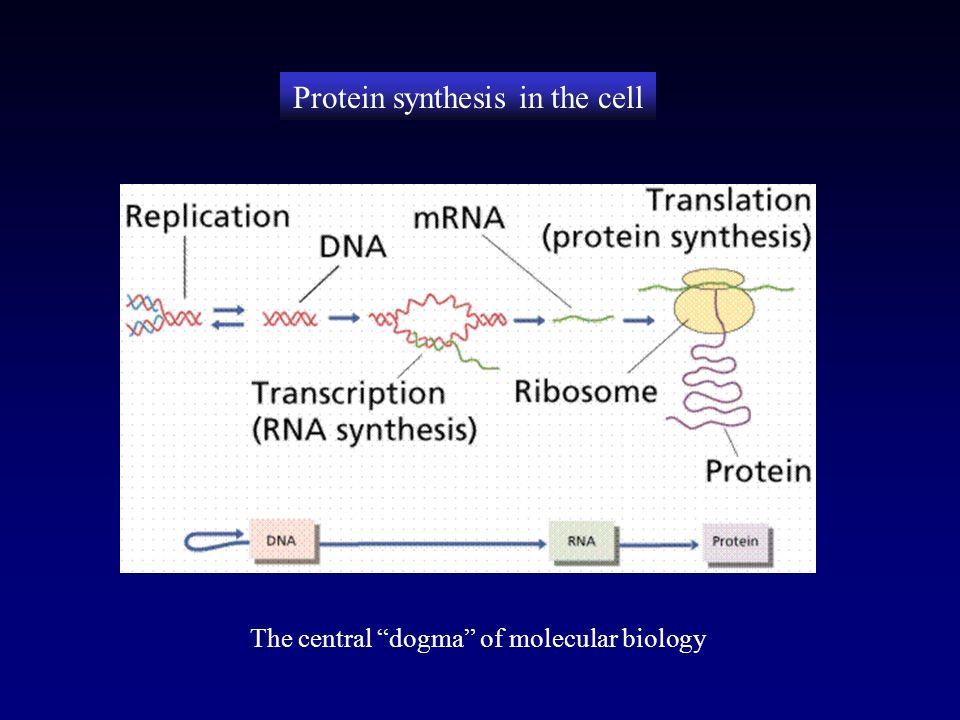 Structural biology martina mijukovi eth zrich switzerland 3 protein toneelgroepblik Images