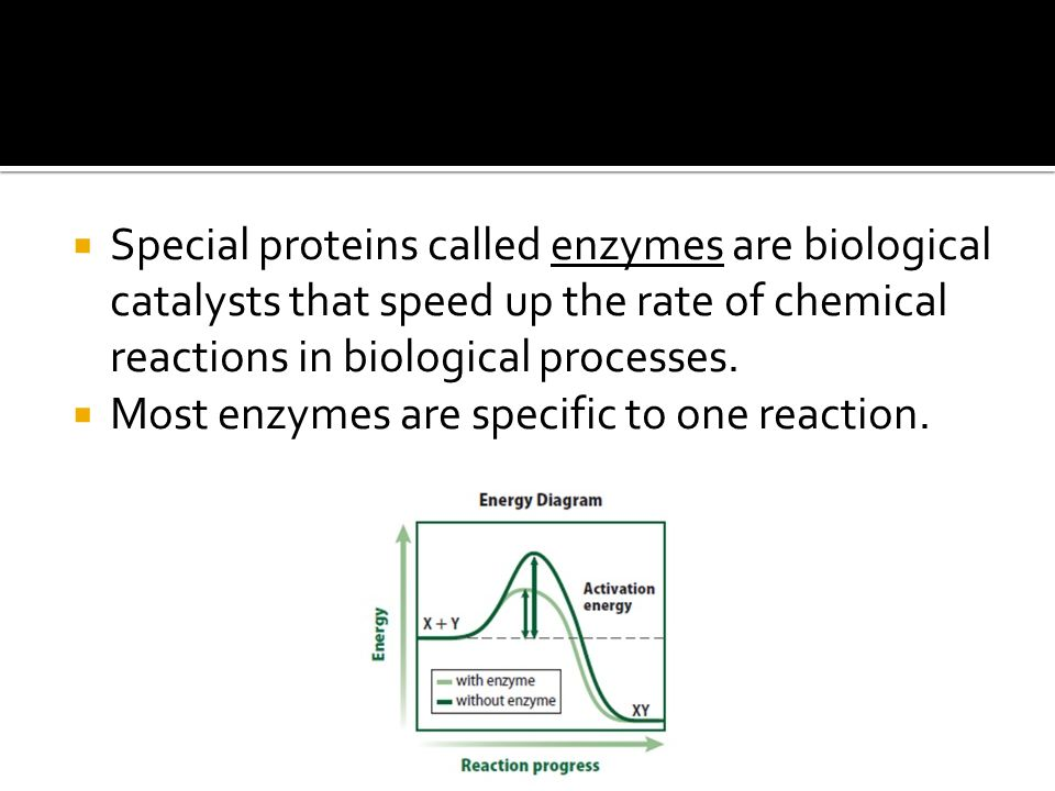  Special proteins called enzymes are biological catalysts that speed up the rate of chemical reactions in biological processes.