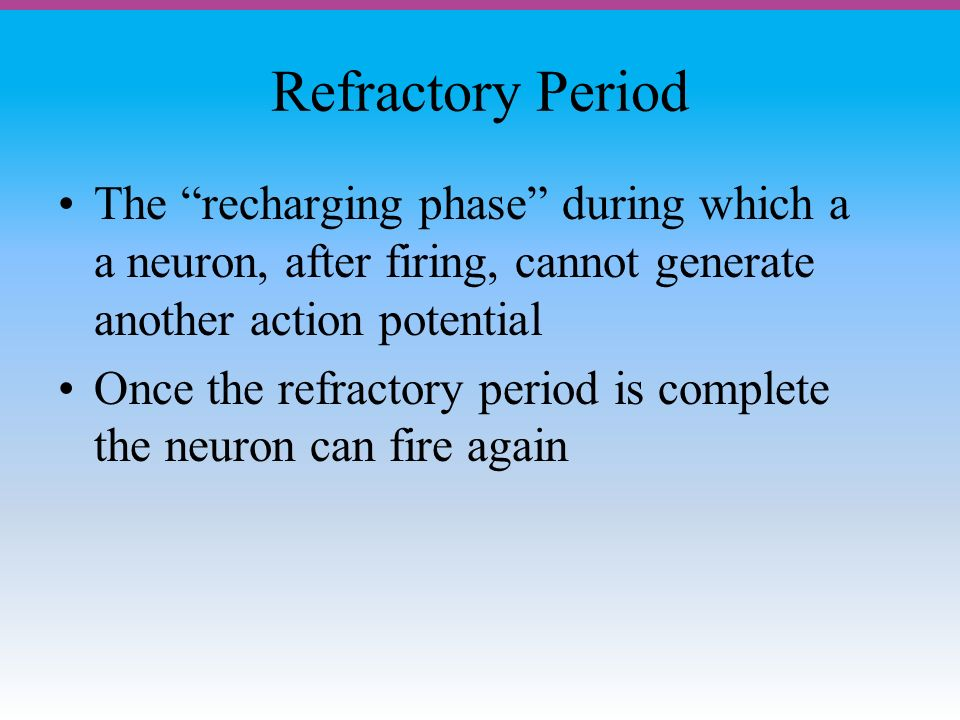 Refractory Period The recharging phase during which a a neuron, after firing, cannot generate another action potential Once the refractory period is complete the neuron can fire again