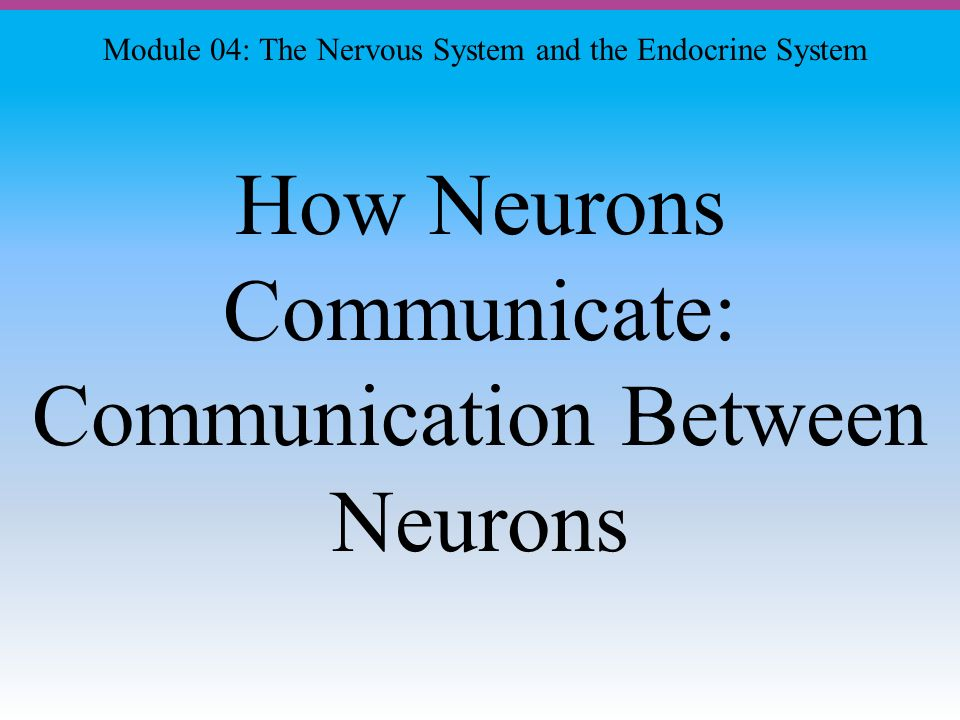 How Neurons Communicate: Communication Between Neurons Module 04: The Nervous System and the Endocrine System