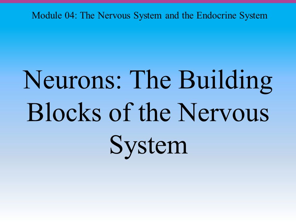 Neurons: The Building Blocks of the Nervous System Module 04: The Nervous System and the Endocrine System