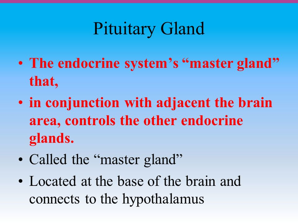 Pituitary Gland The endocrine system's master gland that, in conjunction with adjacent the brain area, controls the other endocrine glands.