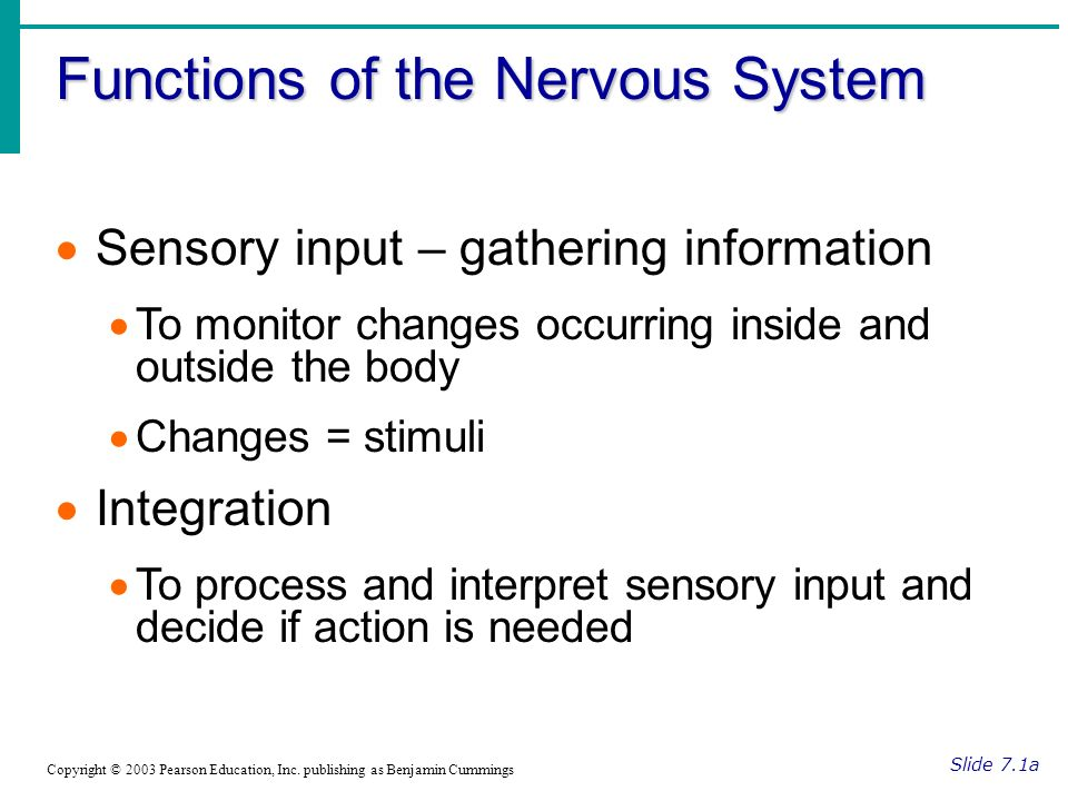 Functions of the Nervous System Slide 7.1a Copyright © 2003 Pearson Education, Inc.
