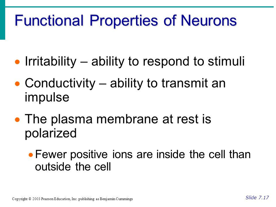 Functional Properties of Neurons Slide 7.17 Copyright © 2003 Pearson Education, Inc.