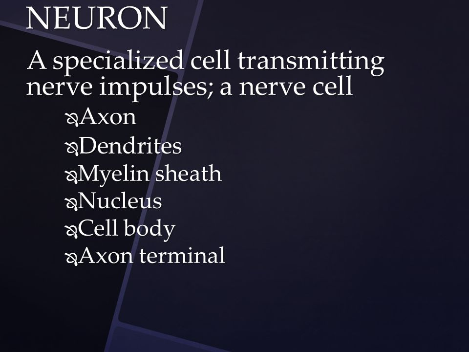 A specialized cell transmitting nerve impulses; a nerve cell  Axon  Dendrites  Myelin sheath  Nucleus  Cell body  Axon terminal NEURON