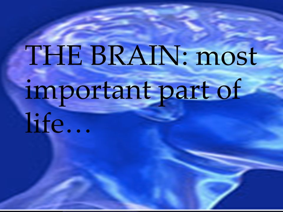 THE BRAIN: most important part of life…