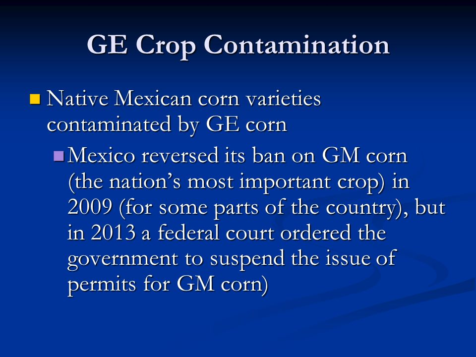 GE Crop Contamination Native Mexican corn varieties contaminated by GE corn Native Mexican corn varieties contaminated by GE corn Mexico reversed its ban on GM corn (the nation's most important crop) in 2009 (for some parts of the country), but in 2013 a federal court ordered the government to suspend the issue of permits for GM corn) Mexico reversed its ban on GM corn (the nation's most important crop) in 2009 (for some parts of the country), but in 2013 a federal court ordered the government to suspend the issue of permits for GM corn)