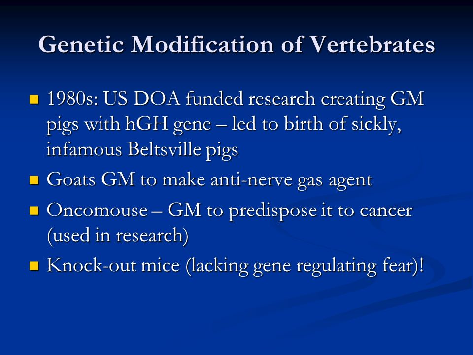 Genetic Modification of Vertebrates 1980s: US DOA funded research creating GM pigs with hGH gene – led to birth of sickly, infamous Beltsville pigs 1980s: US DOA funded research creating GM pigs with hGH gene – led to birth of sickly, infamous Beltsville pigs Goats GM to make anti-nerve gas agent Goats GM to make anti-nerve gas agent Oncomouse – GM to predispose it to cancer (used in research) Oncomouse – GM to predispose it to cancer (used in research) Knock-out mice (lacking gene regulating fear).