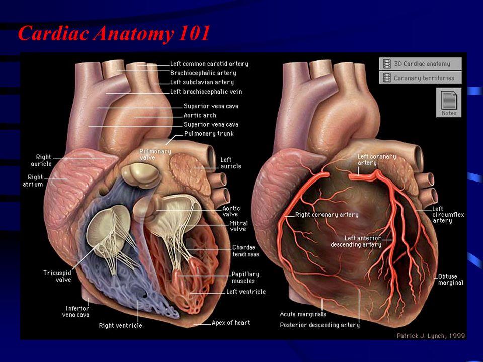 Human Anatomy 101 Images - human anatomy organs diagram
