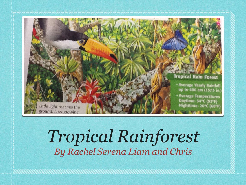 El Yunque rain forest in Puerto Ricoanimalsplantspuerto