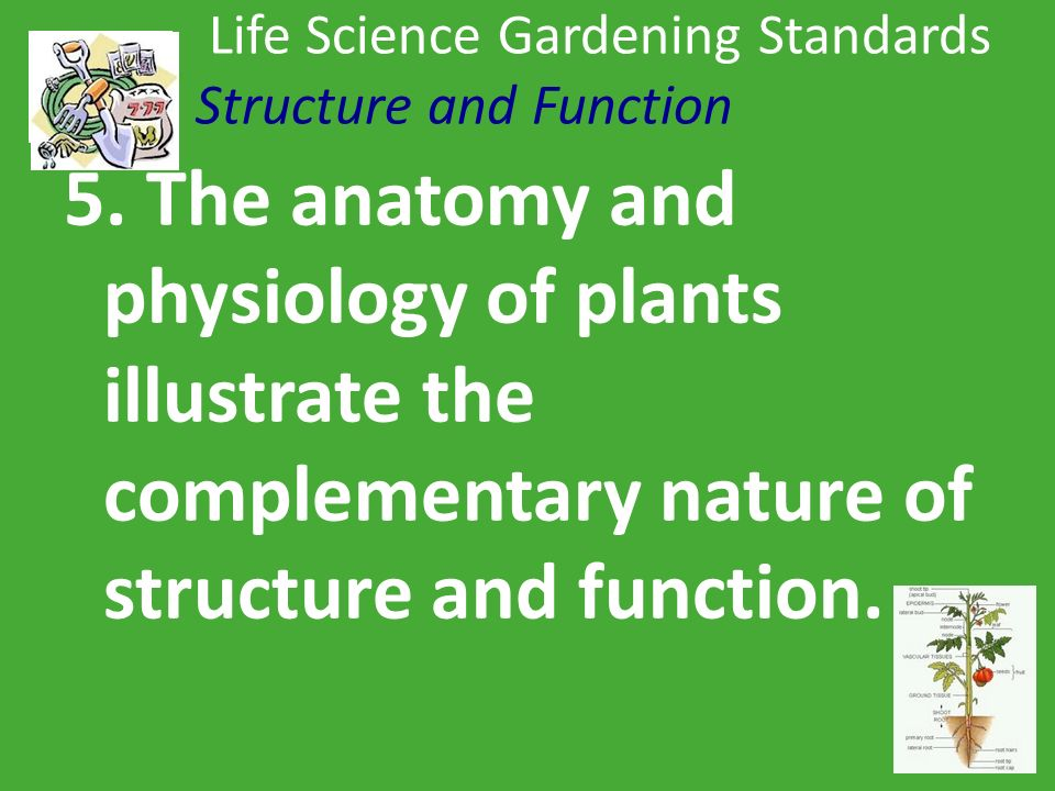 Life Science Gardening Standards Cell Biology 1. All living ...