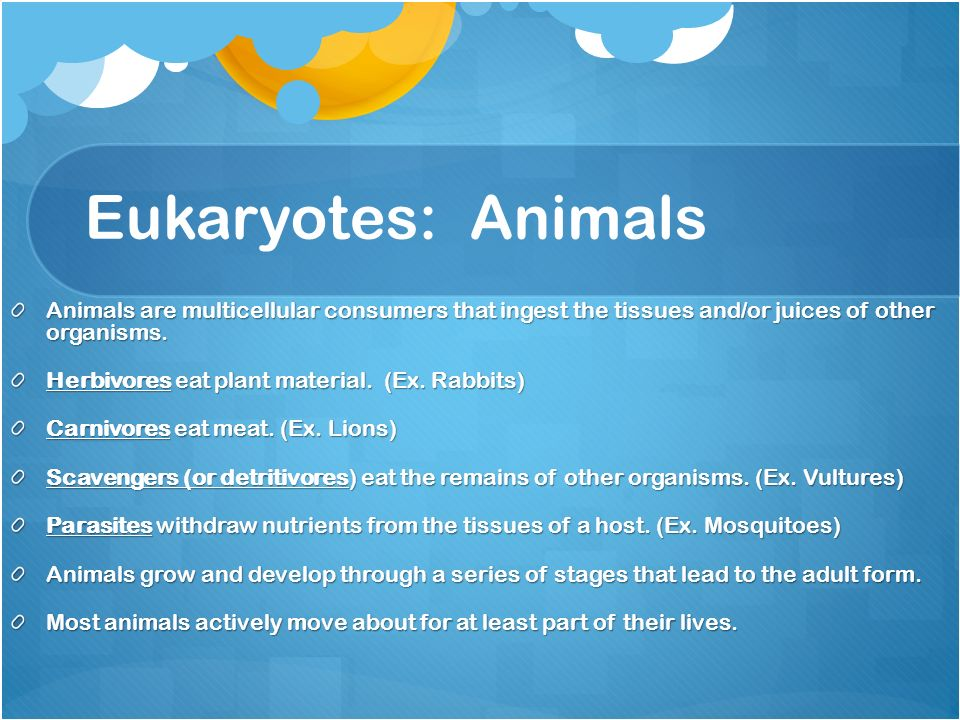 Eukaryotes: Animals Animals are multicellular consumers that ingest the tissues and/or juices of other organisms.