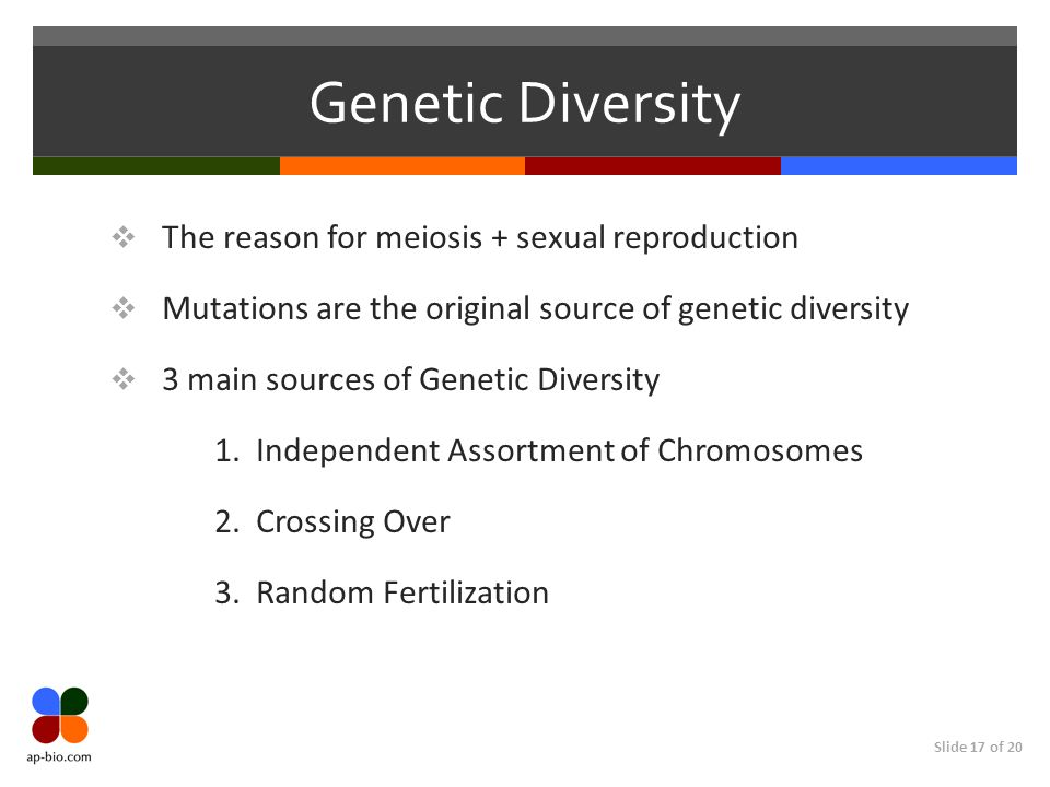 meiosis and genetic diversity in the Sordaria lab report - free download as word doc (doc / docx), pdf file (pdf)  meiosis and genetic diversity in the model organism, sordaria written.