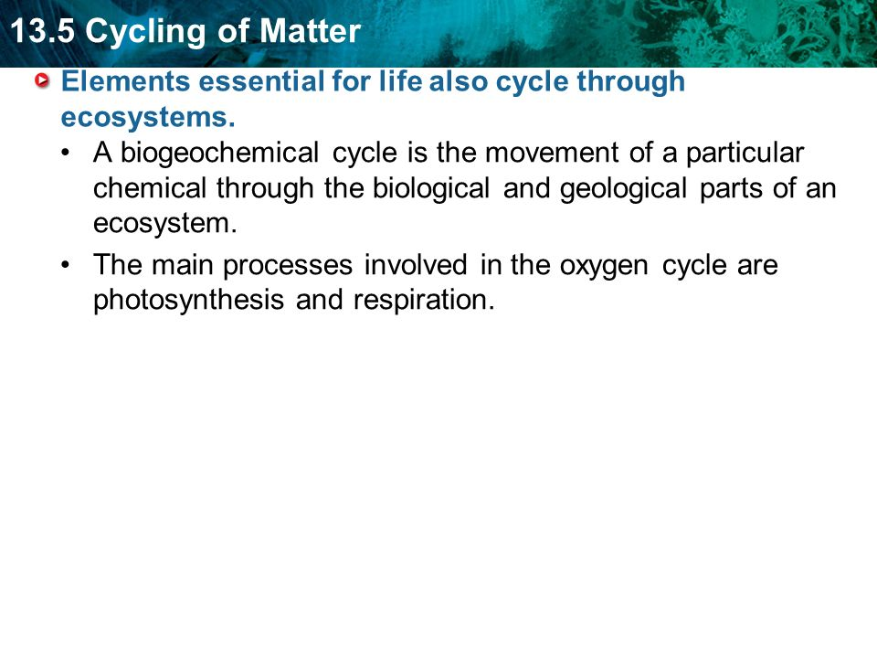 13.5 Cycling of Matter Elements essential for life also cycle through ecosystems.