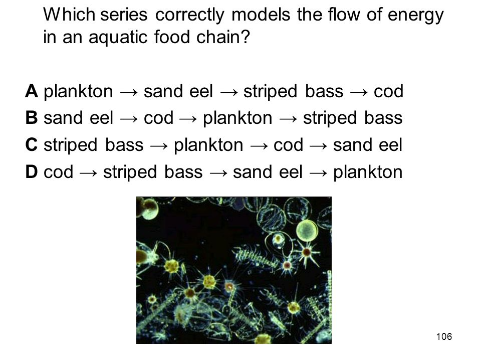 Which series correctly models the flow of energy in an aquatic food chain.