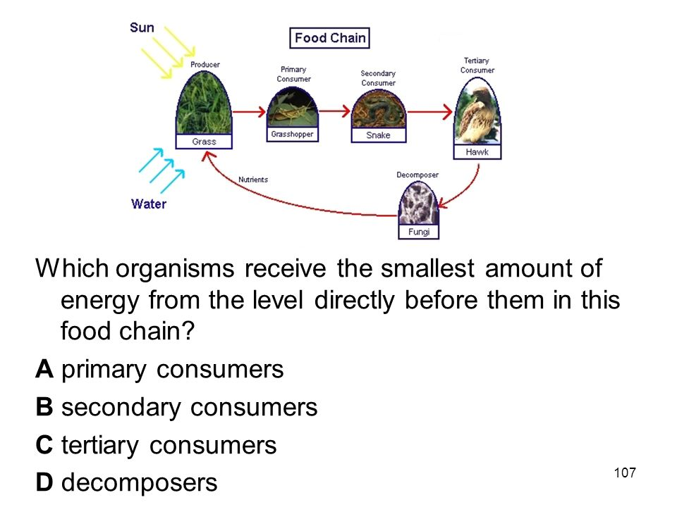 52 Which organisms receive the smallest amount of energy from the level directly before them in this food chain.