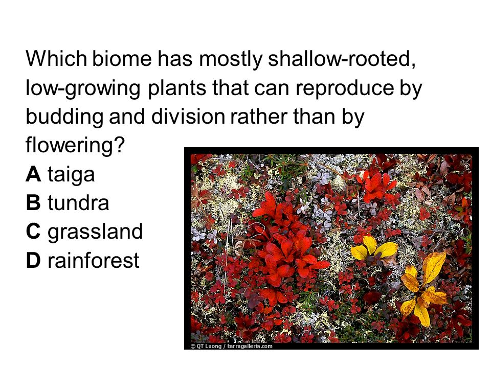 Which biome has mostly shallow-rooted, low-growing plants that can reproduce by budding and division rather than by flowering.