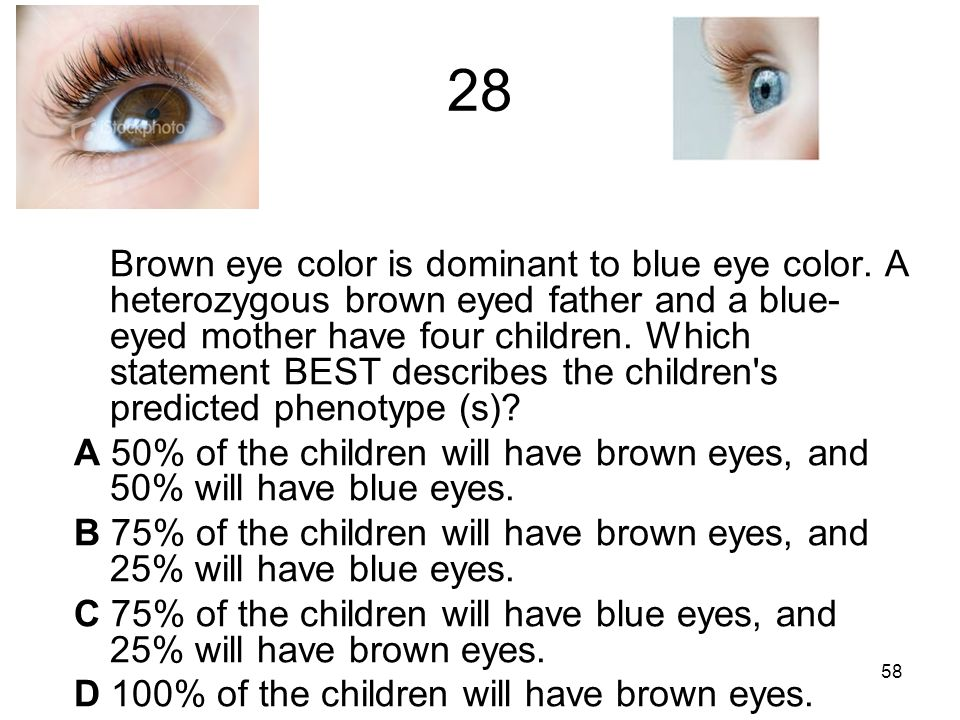 28 Brown eye color is dominant to blue eye color.