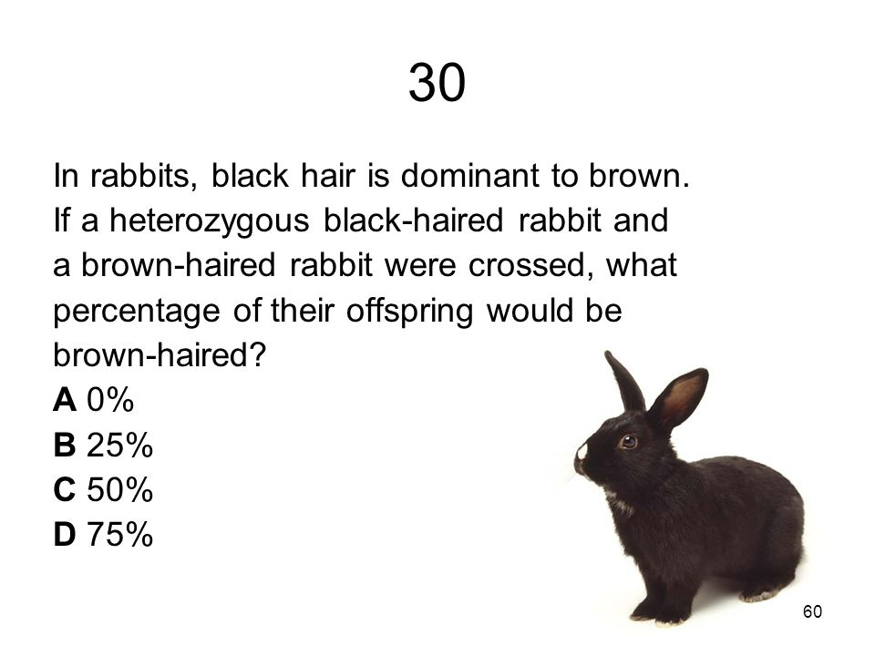 30 In rabbits, black hair is dominant to brown.