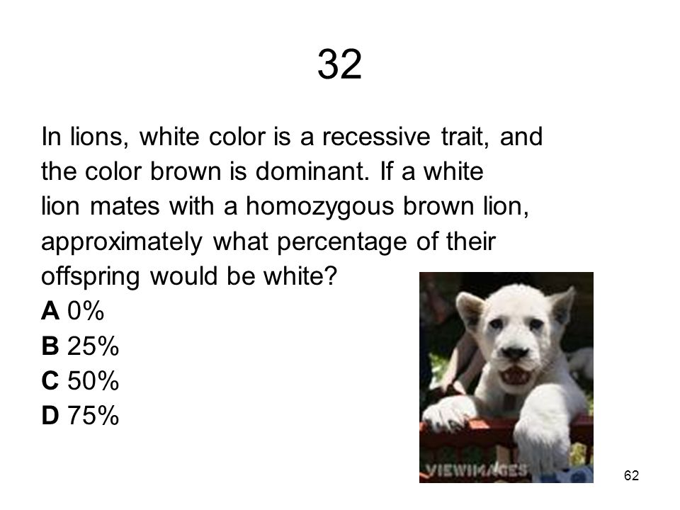 32 In lions, white color is a recessive trait, and the color brown is dominant.