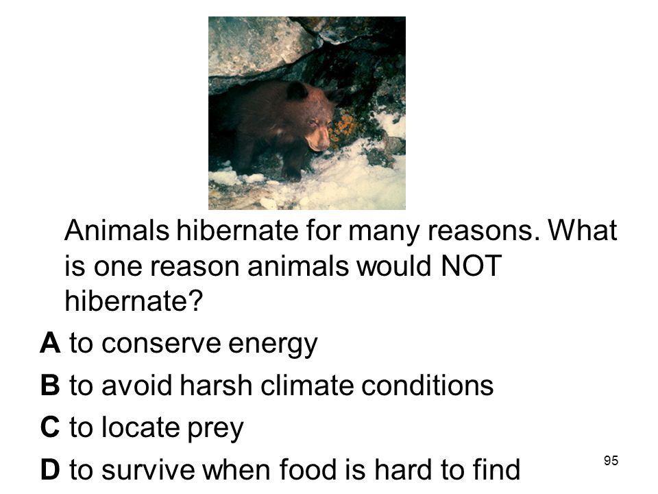 Animals hibernate for many reasons. What is one reason animals would NOT hibernate.