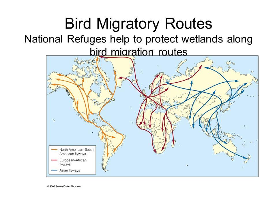 Characteristics Of Species Prone To Extinction Amphibians Of - Amphibian loss us map