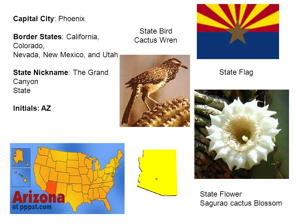 nevada new mexico and utah state nickname the grand canyon state initials az state flag state flower sagurao cactus blossom state bird cactus wren