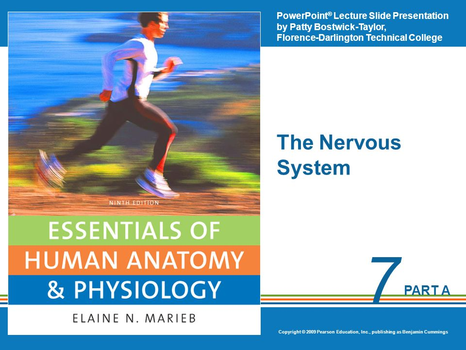 PowerPoint ® Lecture Slide Presentation by Patty Bostwick-Taylor, Florence-Darlington Technical College Copyright © 2009 Pearson Education, Inc., publishing as Benjamin Cummings PART A 7 The Nervous System