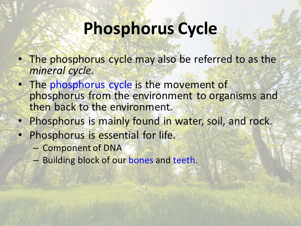 Phosphorus Cycle The phosphorus cycle may also be referred to as the mineral cycle.