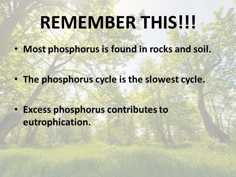 REMEMBER THIS!!. Most phosphorus is found in rocks and soil.