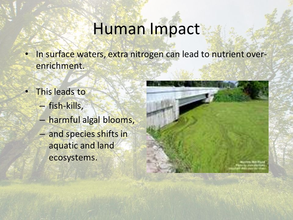 Human Impact In surface waters, extra nitrogen can lead to nutrient over- enrichment.
