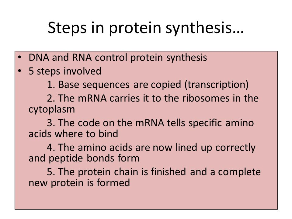 first step of protein synthesis Steps in protein synthesis 1transcription 2translation transcription is the process by which an mrna template, carrying the sequence of the protein, is produced for the translation step from the genome transcription makes the template from one strand of the dna double helix, called the template strand.
