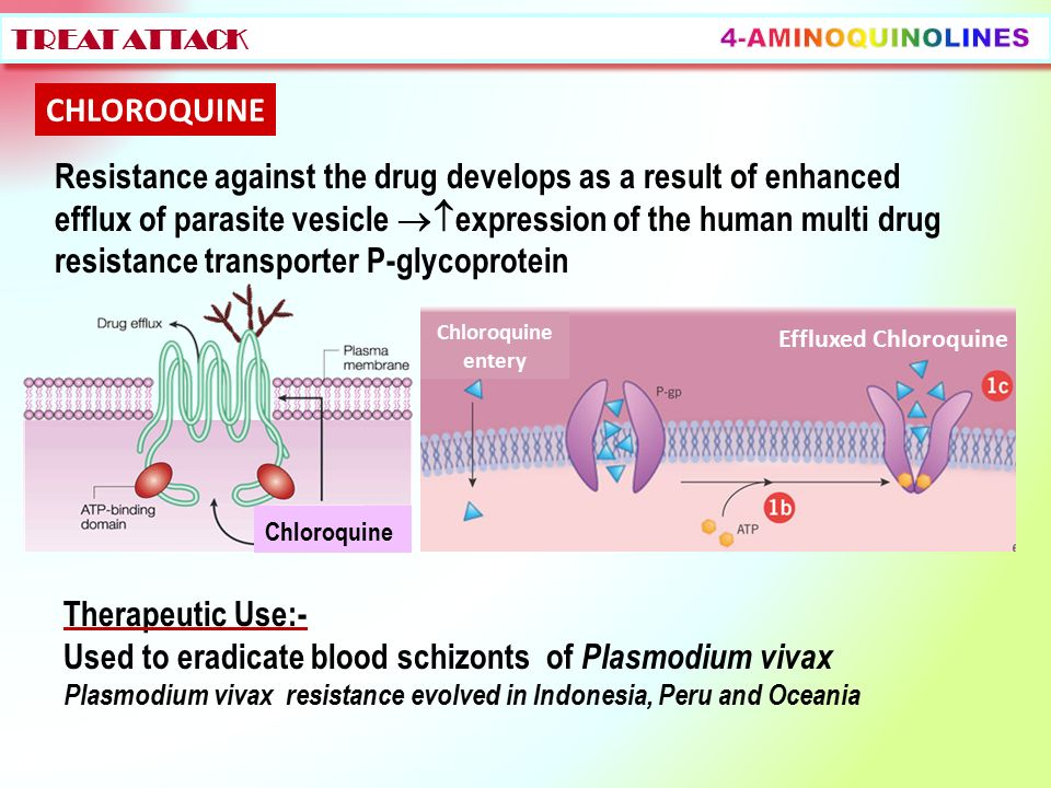 letrozole tablets lp